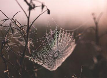"""Walking into Spiderwebs"""